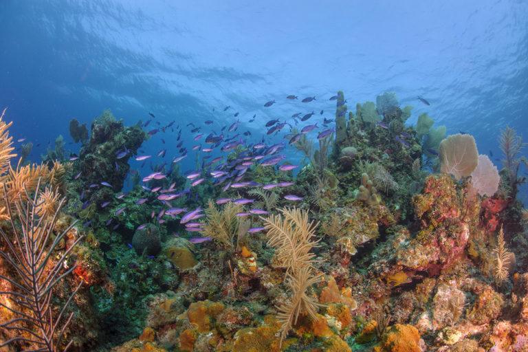 Underwater reef off Guanaja, Honduras. Photo credit: Rare.