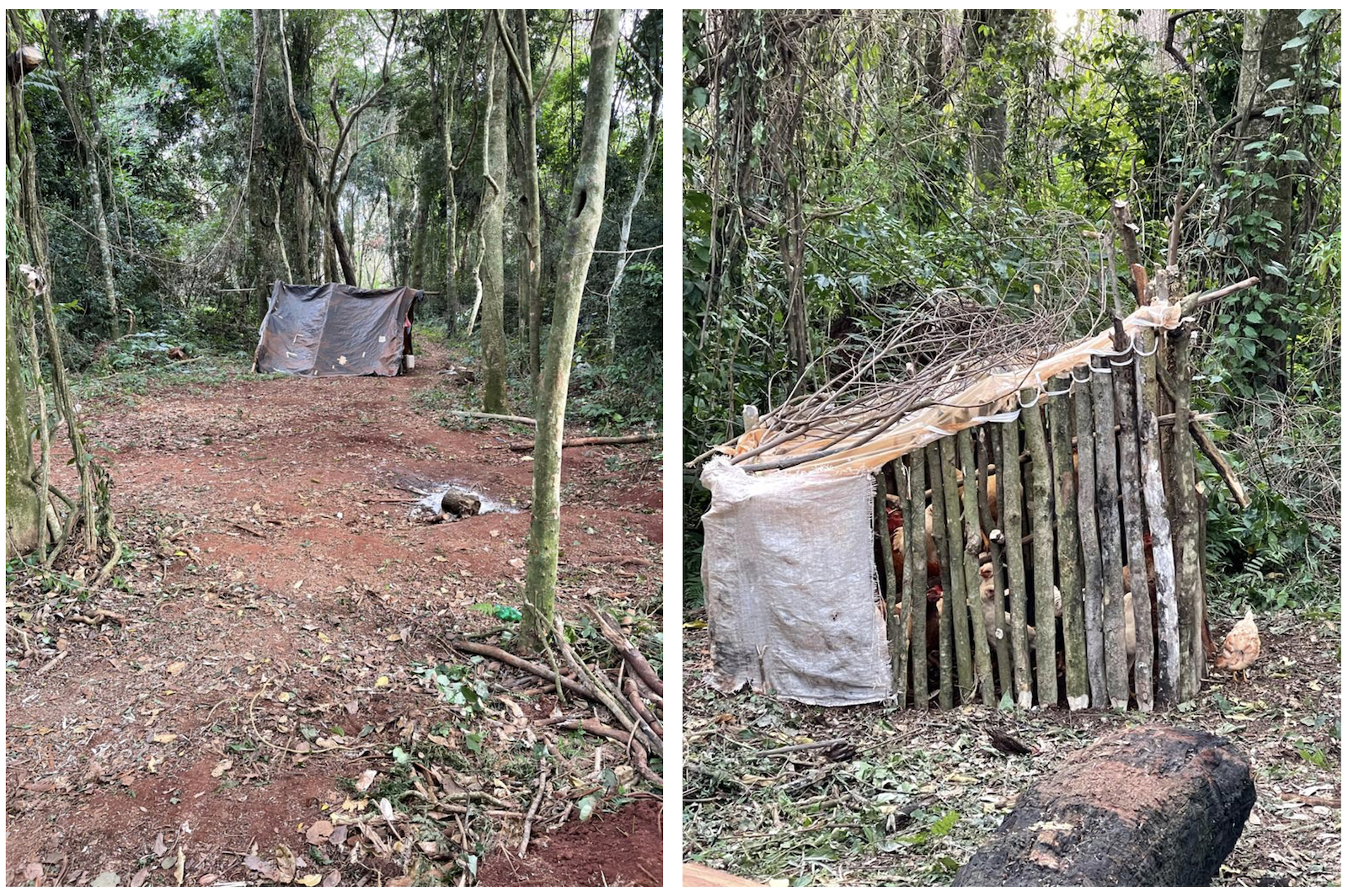 This encampment and a makeshift coop filled with chickens appeared in San Rafael in late May. Image used with permission from anonymous source.