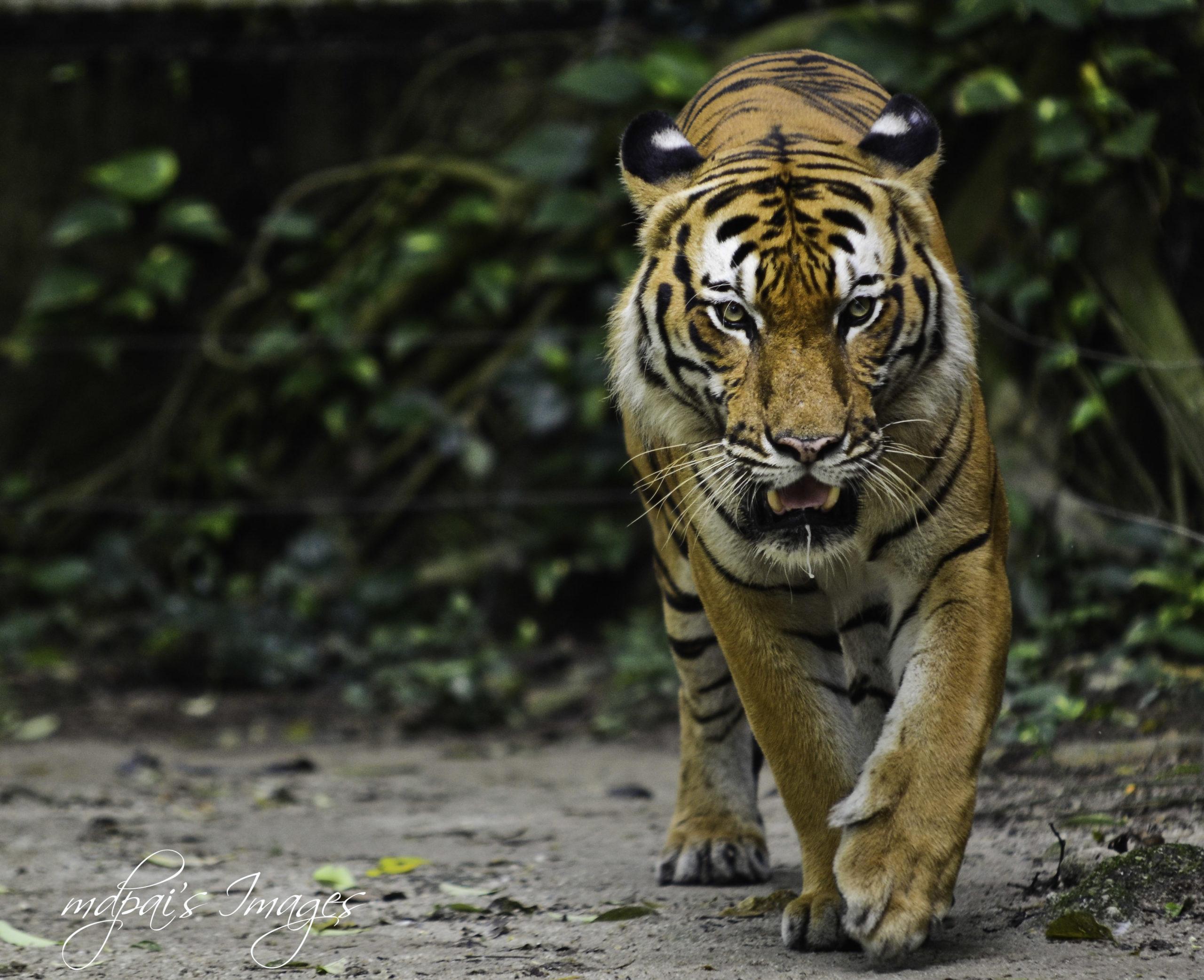 Wildlife trafficking, like everything else, has gone online during COVID-19