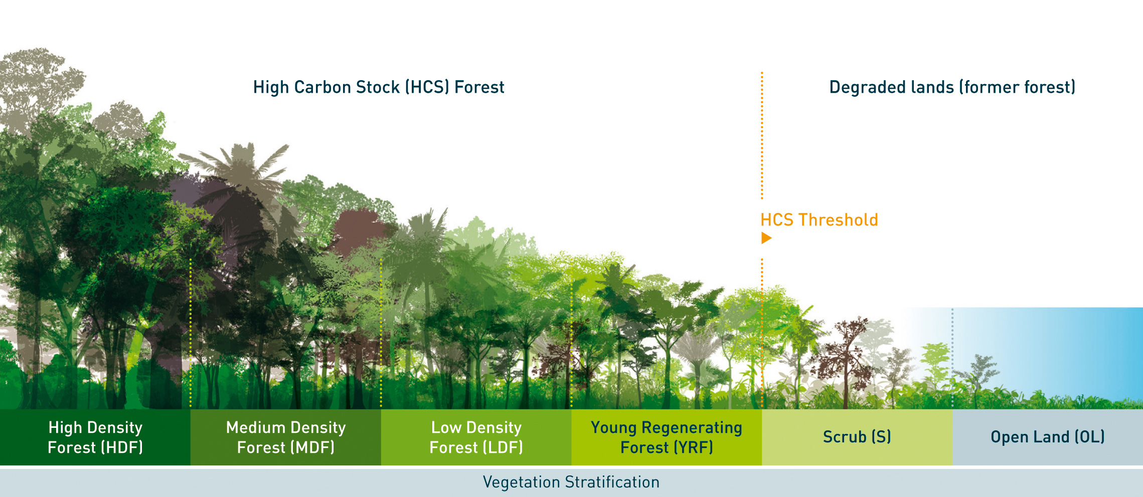 Vegetation Stratification. Module 4 Forest and vegetation stratification, HCS Approach Toolkit v2.0 May 2017. © 2017 High Carbon Stock Approach Steering Group.