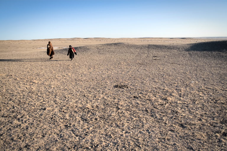 A herder with his camel in the Gobi Desert.