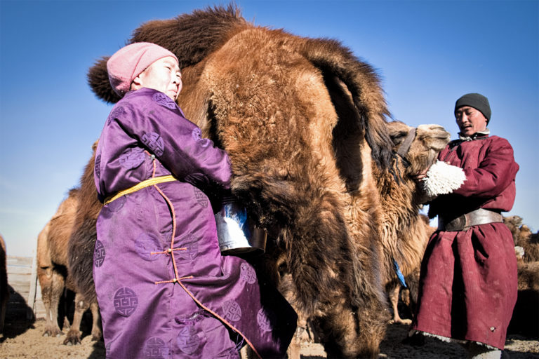 Nomadic life is decreasing in Mongolia, but it is still a backbone for the country's culture and economy.