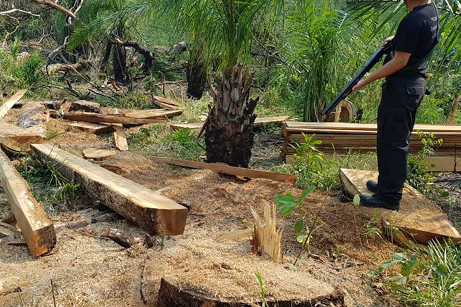 Federal police, Funai and Ibama carry out a joint operation in 2019 to curb illegal deforestation in the Kadiwéu Indigenous Land in Mato Grosso do Sul.