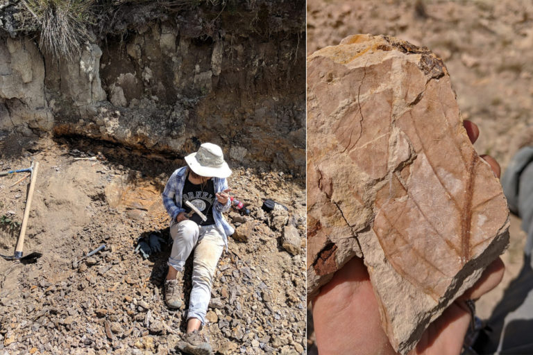 Mónica Carvalho collects late Cretaceous leaf fossils at field sites in the Maastrichtian Guaduas Formation in the Colombian Andes.