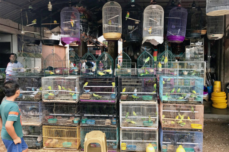 Bird market in Sumenep, East Java.