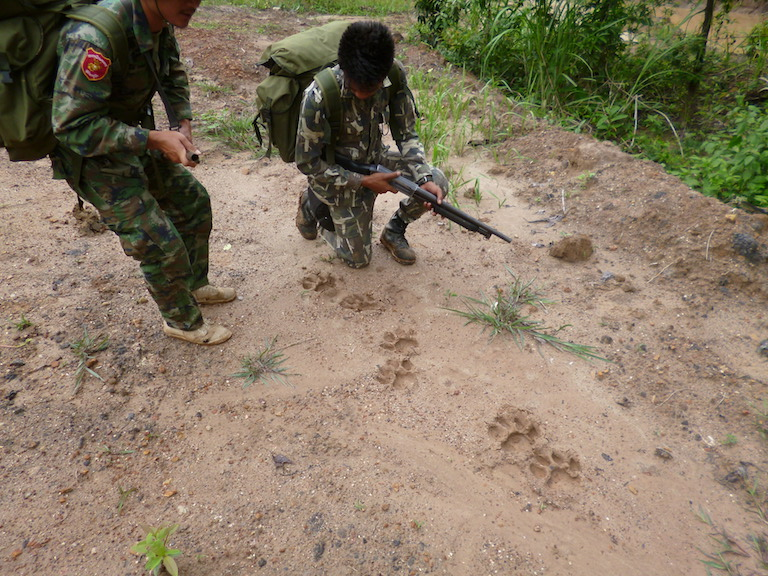 Thai rangers examine tracks of an Indochinese tiger. Photo courtesy of Gregory McCann.