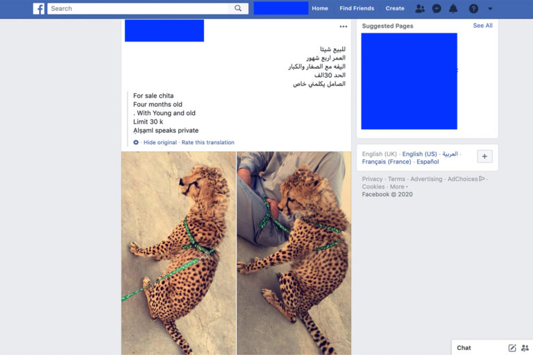 A cheetah for sale on Facebook in 2020.
