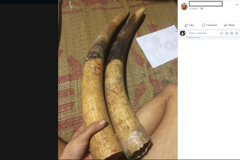 Elephant ivory for sale on Facebook in 2017.
