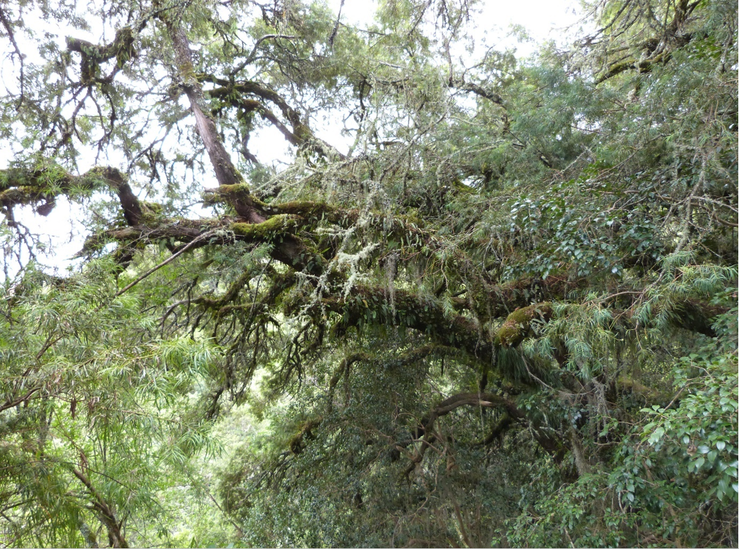 Inter-Andean dry forest in El Palmar. Image by Claire Wordley.