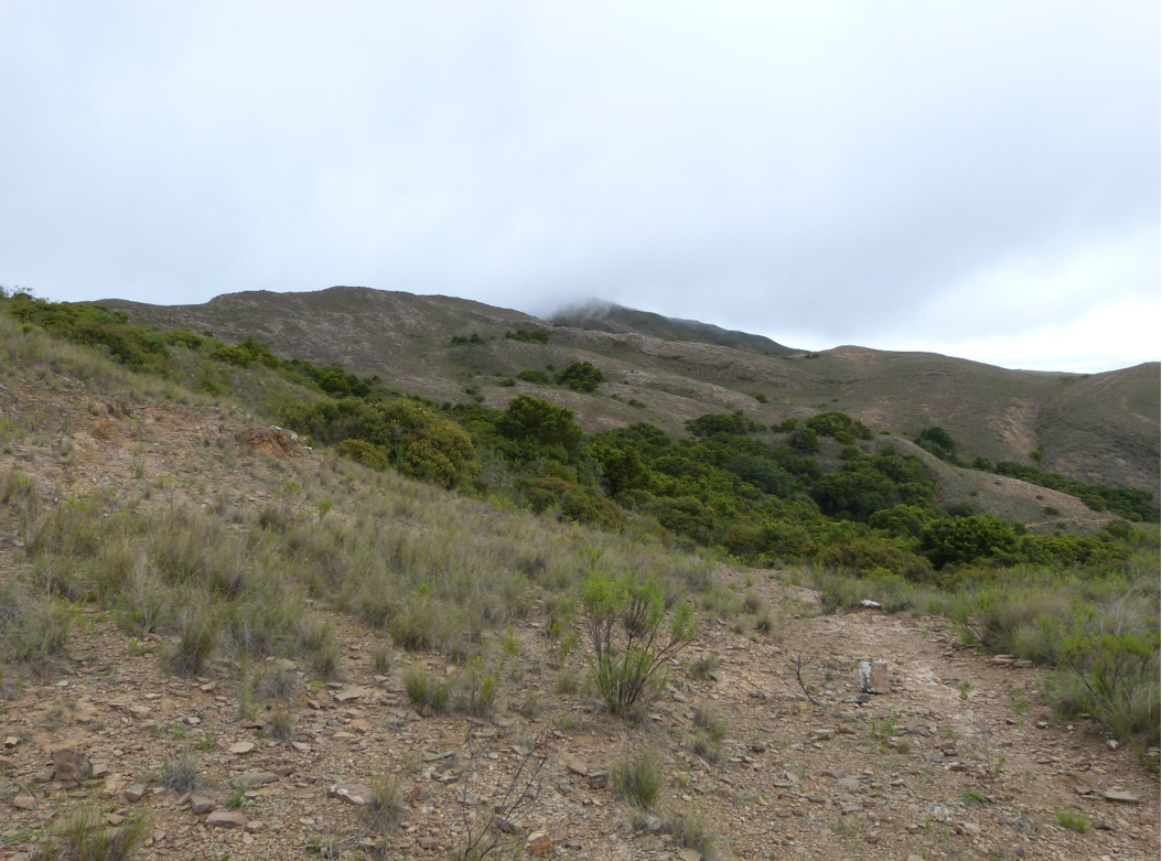 Patch of native forest in El Palmar Integrated Management Natural Area. Image by Claire Wordley.
