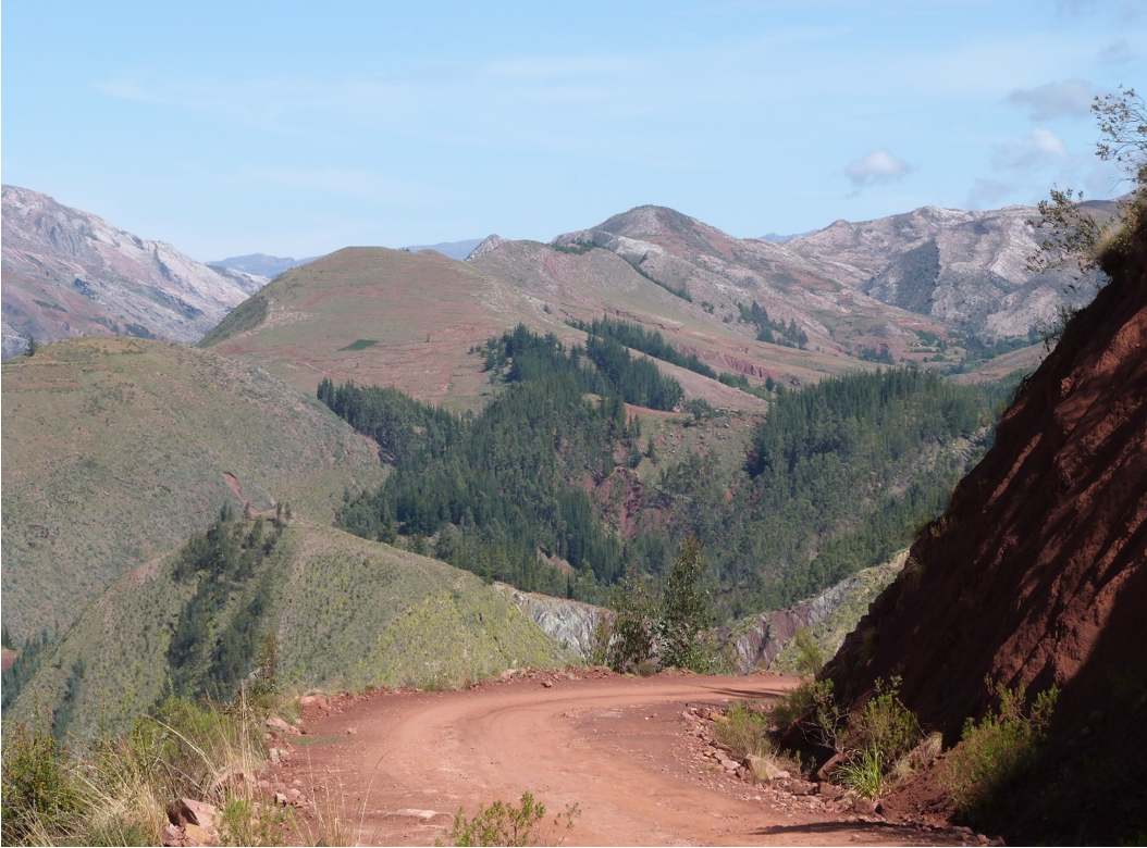 European pines planted in the inter-Andean valleys near Sucre. Image by Claire Wordley.