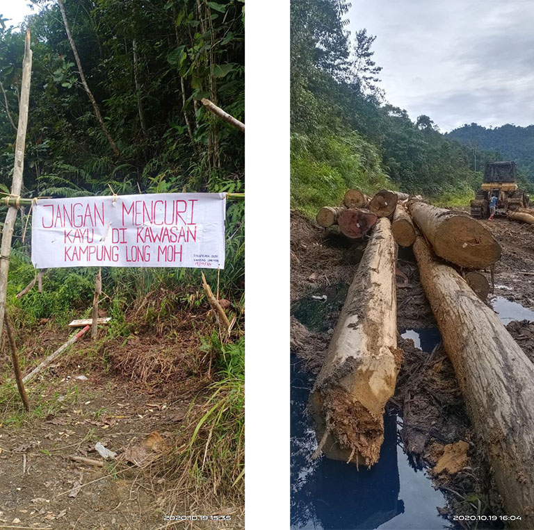 Protest sign and logging in the Baram Peace Park area in November 2019. Photo credit: The Borneo Project