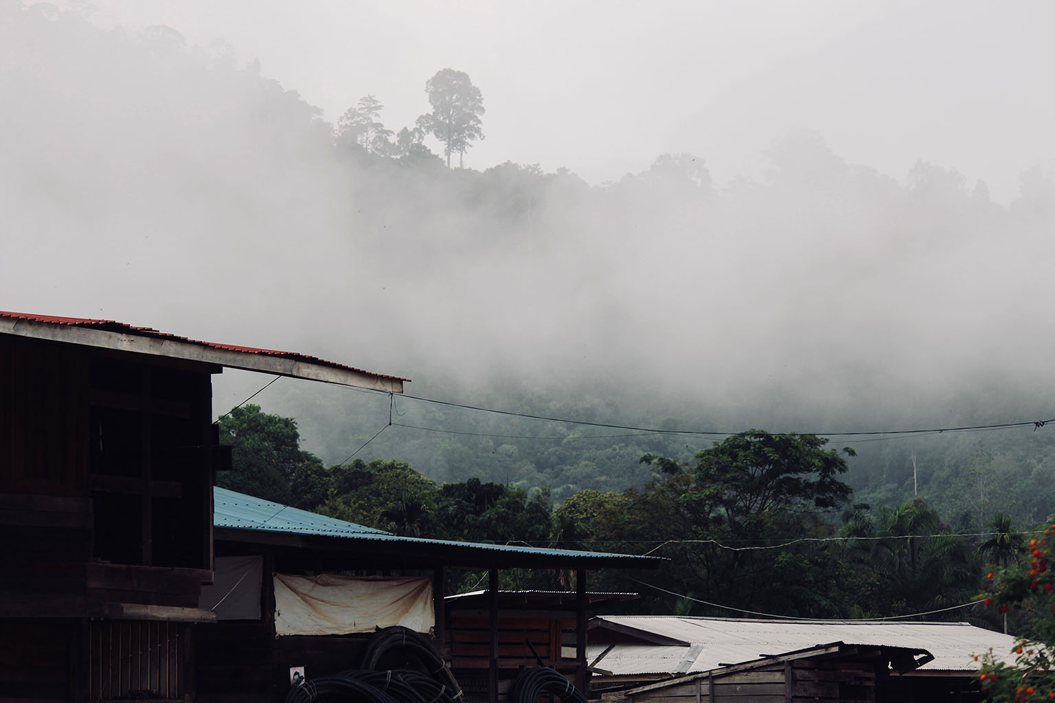 Long Siut, an Indigenous village, in July 2018. Photo credit: Fiona McAlpine of The Borneo Project