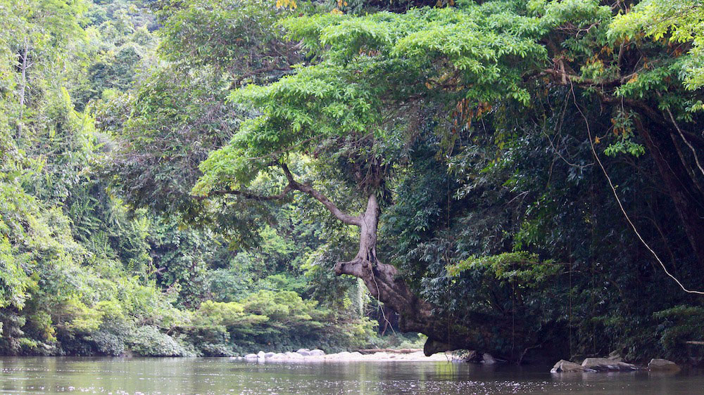 The Selungo River in the Upper Baram Peace Park area in May 2021. Image credit: The Borneo Project