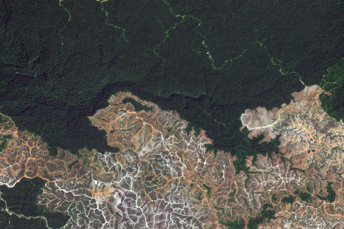 Satellite image showing large-scale forest clearance in Sarawak in 2013. Courtesy of Google Earth.