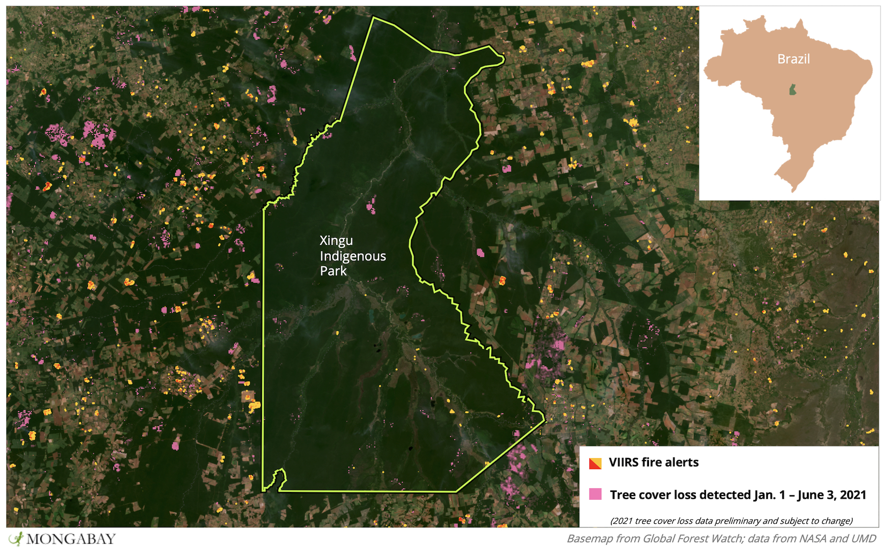 An island in a sea of deforestation, Xingu Indigenous Park is not completely immune to the clearing around it. The pink areas of tree cover loss in the park are places where trees are still dying due to last year's fire season - as this year's season starts to ramp up.