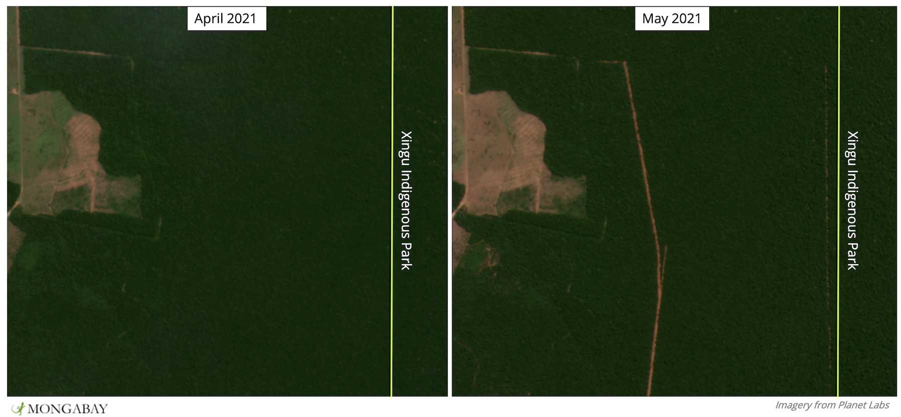 Satellite imagery shows recent clearing very close to Xingu Indigenous Park - including right up against its border.