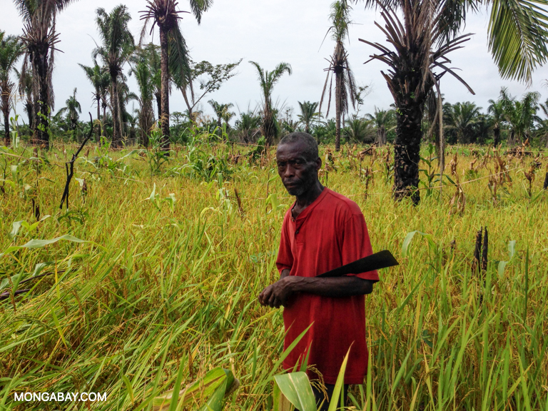 A farmer in his rice field in the Democratic Republic of Congo. Image by John C. Cannon/Mongabay.