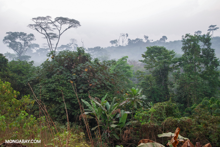 The rainforest at the edge of a village in western Cameroon. Image by John C. Cannon/Mongabay.