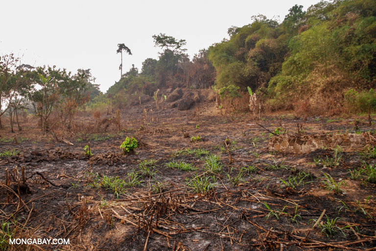 Slash-and-burn subsistence agriculture in Cameroon. Image by John C. Cannon/Mongabay.