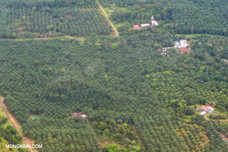 Oil palm plantations seen from the air in Malaysian Borneo. Image by John C. Cannon/Mongabay.