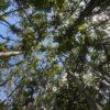 Reforestation project in Borneo using native species. Photo credit: Rhett A. Butler