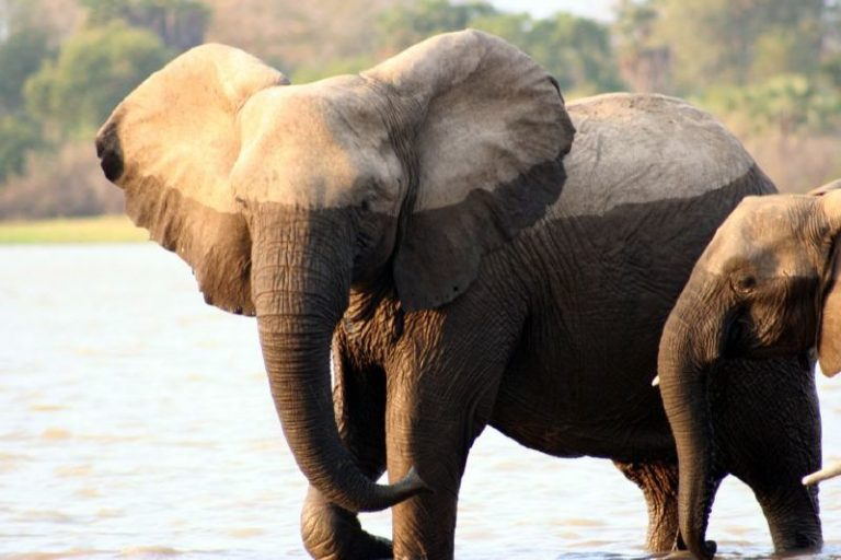 Elephants, Tanzania. Image by Consuelo Puchades via Flickr (CC BY-NC-ND-2.0)