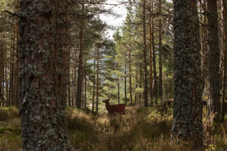 scotland-rewild-14