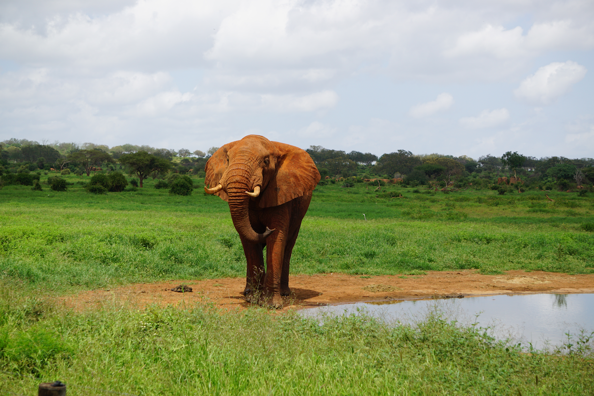 Do we love elephants enough to let them live free? (commentary)