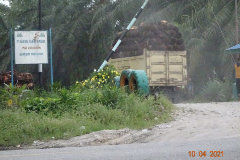 The truck carrying oil palm fresh fruit bunches arrives at the PT. Global Sawit Semesta Crude Palm Oil mill––despite the mill claiming to have a 'No-Buy policy' in effect that means it will not buy from PT. Laot Bangko and other producers that have cleared rainforests in the Leuser Ecosystem. Image courtesy of Rainforest Action Network.