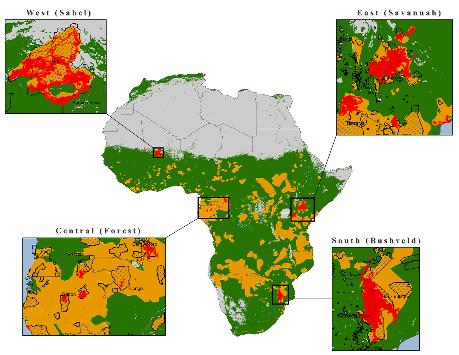 Map which illustrates the potential and actual range of African elephants