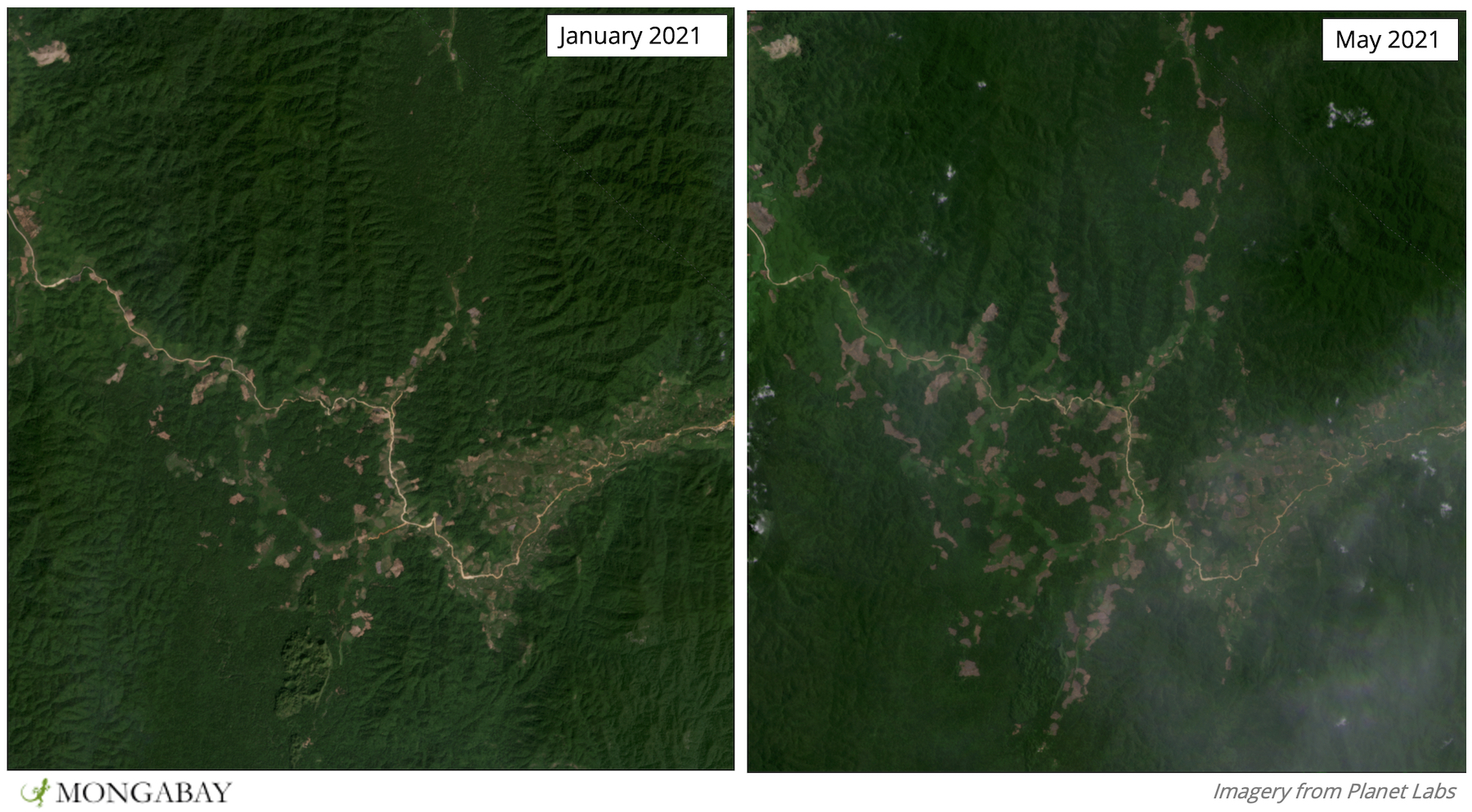 Satellite imagery shows the proliferation of clearings along a road. This area is inhabited by endangered pittas and geckoes.