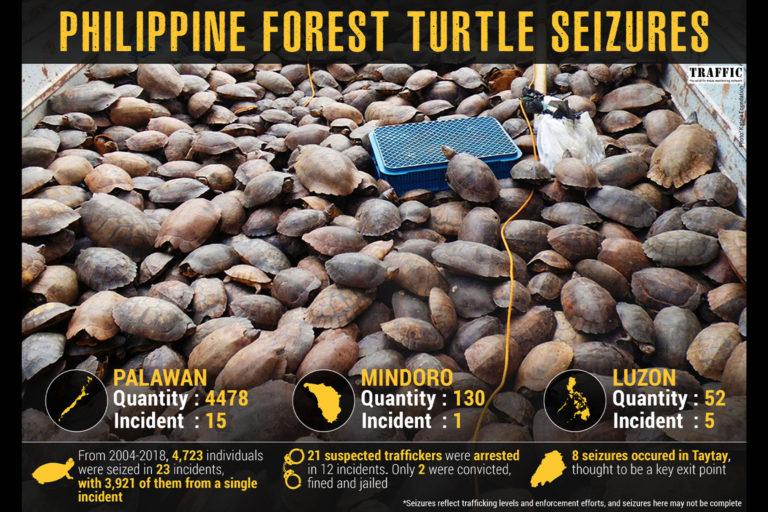 PH_Turtle_Infographic_Seizure(1)