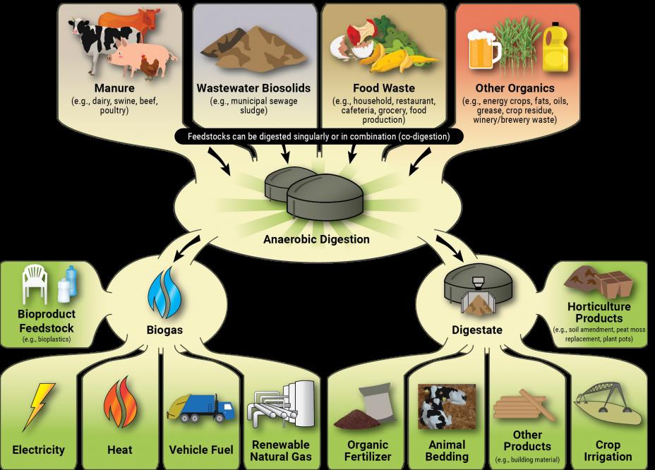 Illustration of how a biogas system works