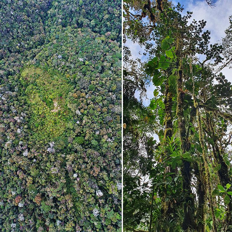 MPNR and Forest Epiphytes