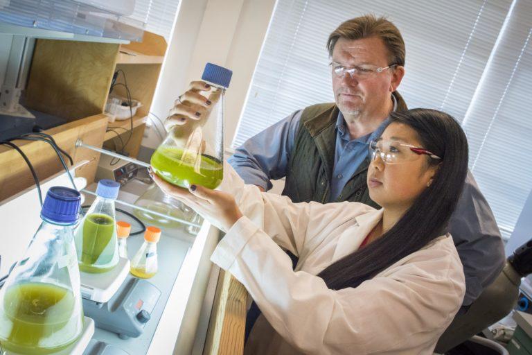 Scientists examine algae strains for biofuel.