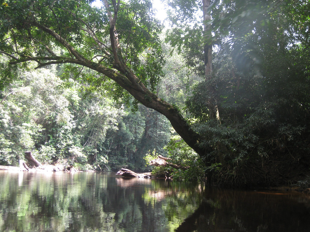 Taman Negara, Peninsular Malaysia's vast rainforest park. According to project's EIA, mining in the Som Forest will affect the ecological integrity of a wildlife corridor linking the Greater Taman Negara Forest Complex with the Krau Wildlife Reserve. Image by Xuanxu via CreativeCommons (CC BY-SA 2.0).