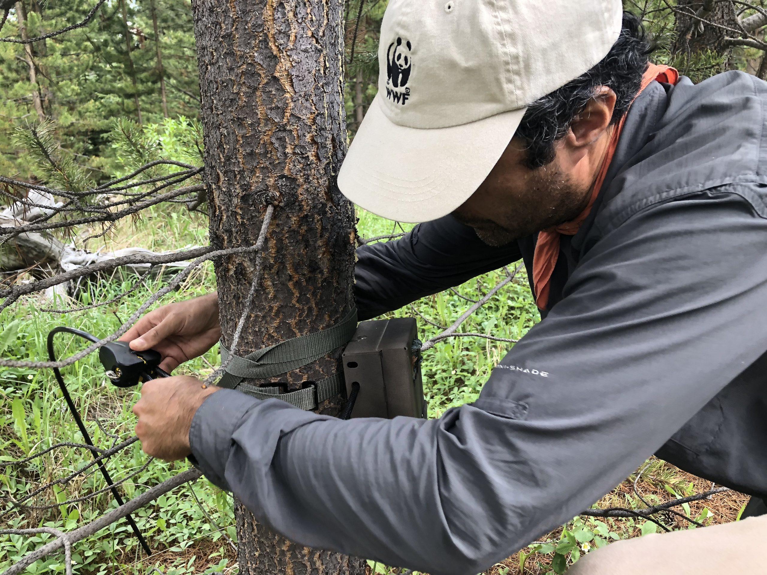 Camera trapping
