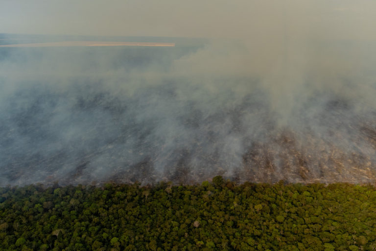 Smoke from the burned, cleared plot drifted over nearby Indigenous villages. A road separates cleared, burned forest from forest that has been spared - so far. Image by Kamikia Kĩsêdjê.