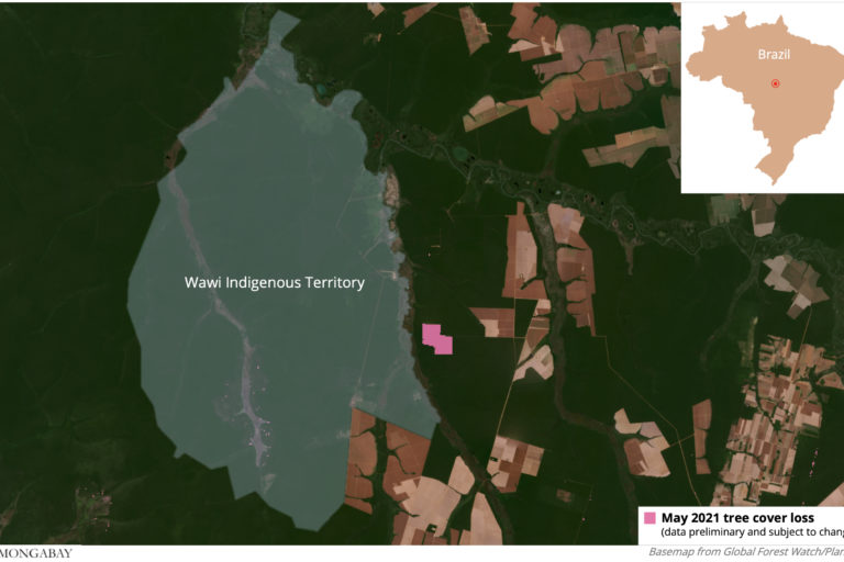Satellite data from the University of Maryland visualized on Global Forest Watch show most clearing of the area happened in May 2021.
