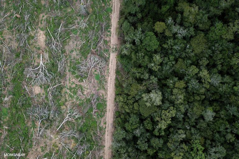 La culture du soja au Brésil. Lorsque la végétation indigène est remplacée par des cultures telles que le soja, le maïs ou le coton, la capacité de stockage de l'eau souterraine est perturbée. Crédit photo : Rhett A. Butler