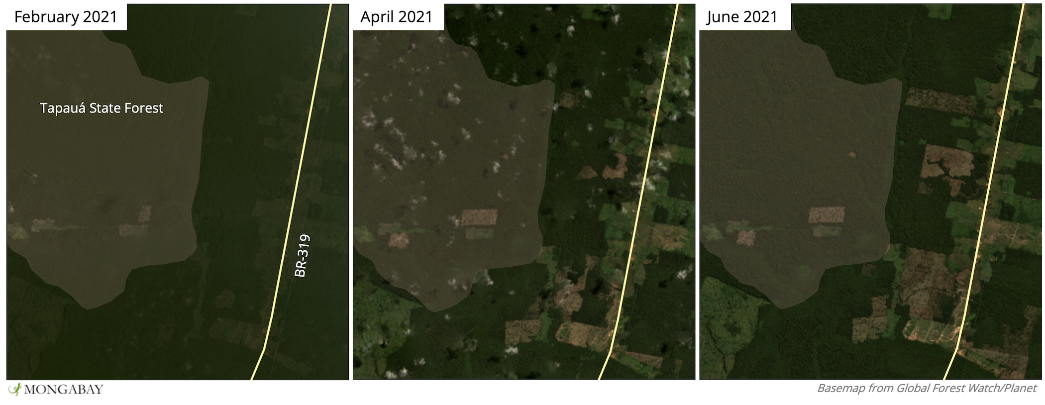 Satellite imagery from Planet Labs shows clearings expanding in Tapauá State Forest.