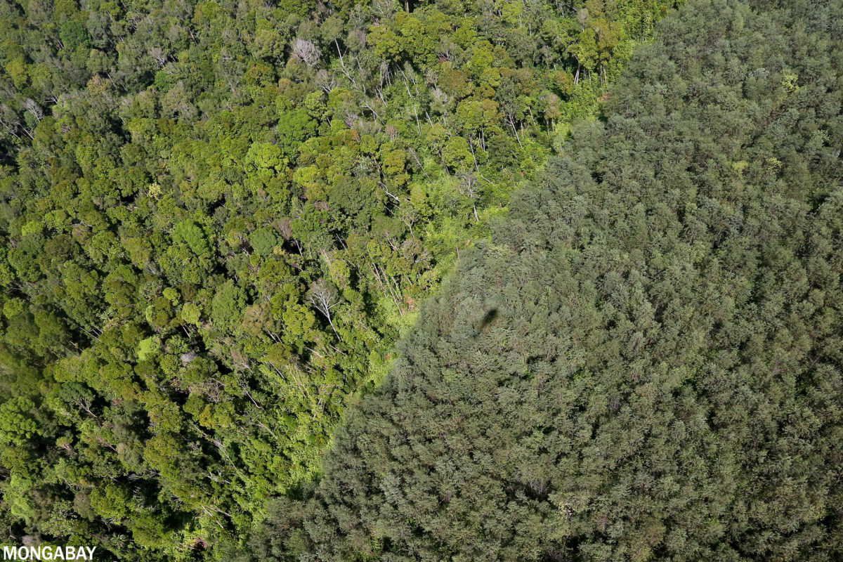 Natural forest and an acacia plantation on the island of Sumatra. Photo credit: Rhett A. Butler