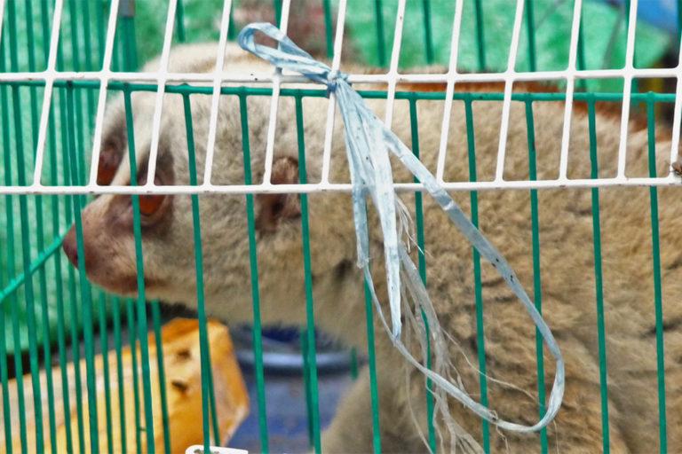 slow-loris-in-wildlife-market