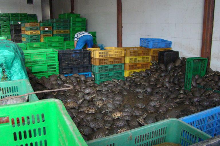 Wild-turtles-food-market-china
