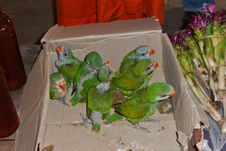 11-Global-bird-trade