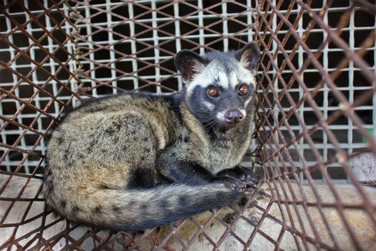 palm-civet-wildlife-farm