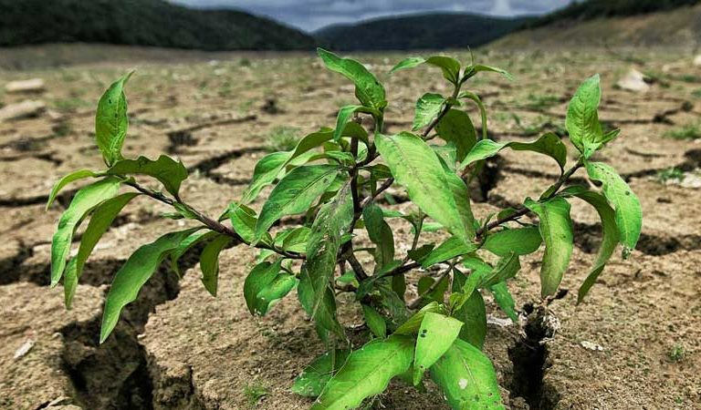 A world of hurt: 2021 climate disasters raise alarm over food security