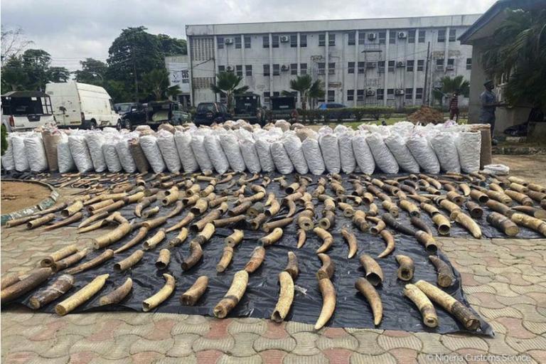 Photos of the seizure. Photo credit: Nigeria Customs Service