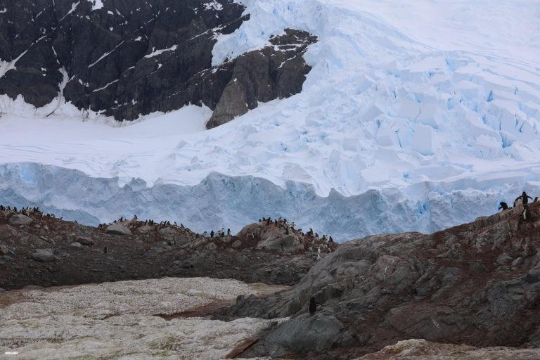 Glacier in Antarctica. Photo credit: N. Butler